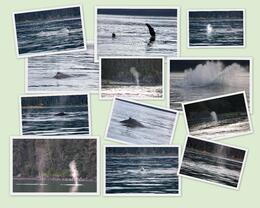 Always keep your camera ready for the whales' antics, or you might miss a great shot! , Suzanne R - September 2013