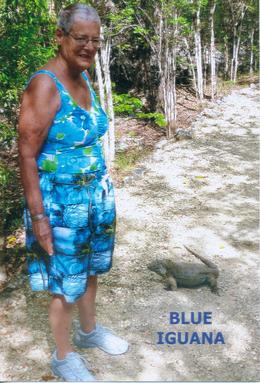 me on the trail and out comes a beautiful blue iguana , Suzanne L - June 2013