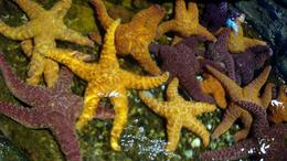 Photo of Seattle Seattle CityPass Starfish