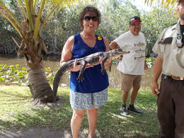 Photo of Miami Miami Everglades Airboat Adventure with Transport and the baby,,,