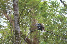 at the picnic point we got up close with some kookaburra's :) , G.E. N - October 2014