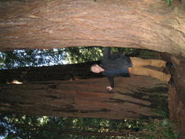 Muir Woods , Arunas Andriulaitis - March 2012