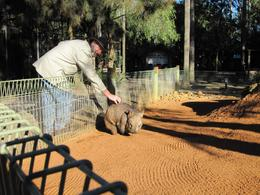 Photo of Sydney Blue Mountains Deluxe Small Group Eco Tour from Sydney Petting a Wombat