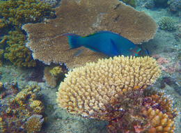 The coral and fish were so close and very colorful. , Kevin F - June 2014