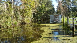 Photo of New Orleans Swamp and Bayou Sightseeing Tour with Boat Ride from New Orleans bayou