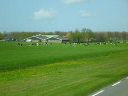 Photo of Amsterdam Zaanse Schans Windmills, Marken and Volendam Half-Day Trip from Amsterdam Farming enroute to Marken