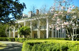 trees blooming in February at Oak Alley Plantation , Linda E - March 2014