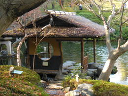 Beautiful Gardens surrounding the Tea Ceremony cottage. , Vincent S - December 2012