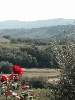 Breath taking view of the Tuscany landscape , Diane Z - October 2014