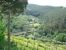 Quinta Das Escomoeiras winery tour , Blair A - May 2015