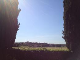 Photo of Rome Ancient Appian Way, Catacombs and Roman Countryside Bike Tour View through the trees