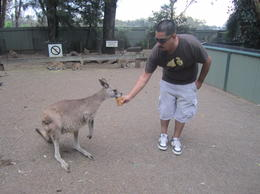 Photo of Sydney Blue Mountains Nature and Wildlife Day Tour from Sydney Feeding the Kangaroos