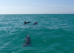 Three of the four dolphins we spotted on our tour. - June 2013