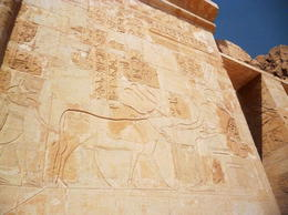 Hathor depicted as a very beautiful cow which was one of her forms being fed by the queen. , Fatma A - March 2014