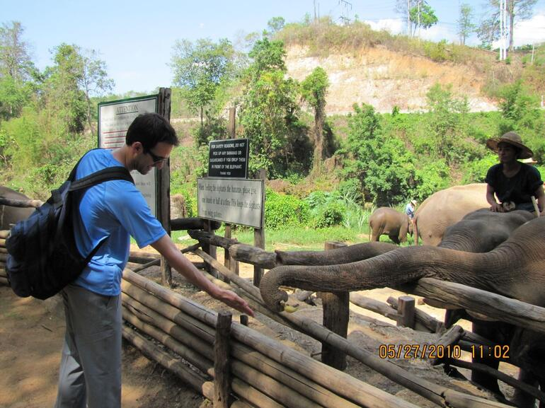 Feeding the elephants - Chiang Mai