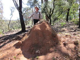 Ray my tour guide standing by this termite hill just to give you an idea of how huge this thing was. It was truly awesome to see, Nicks - December 2013