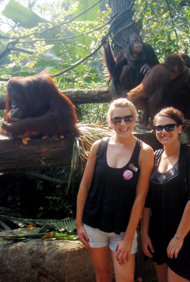Breakfast with Orangutans - Singapore