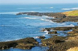 Photo of Melbourne Phillip Island: Penguins, Koalas and Kangaroos Day Tour from Melbourne Nobbies View