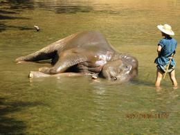Photo of Chiang Mai & Chiang Rai Chiang Dao Elephant Jungle Trek and Ping River Rafting Tour from Chiang Mai Bath time