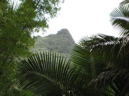 A view of a mountain peak in the rainforest of the El Yunque National Forest in Puerto Rico. , Jacqes B - June 2015