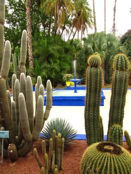 Photo of Marrakech Marrakech Discovery Tour Jardin Majorelle