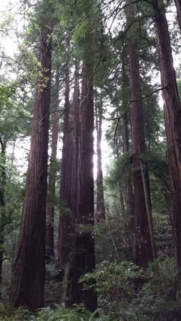 Photo of San Francisco Muir Woods and Sausalito Tour plus Bay Cruise Redwoods