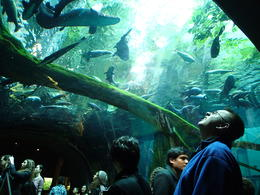 Photo of San Francisco Skip the Line: California Academy of Sciences General Admission Ticket Walking under water