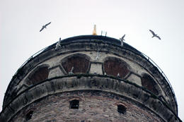 Birds flying across the Galata Tower , Prezzman - June 2014