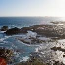 Photo of Melbourne Phillip Island: Penguins, Koalas and Kangaroos Day Tour from Melbourne Nobbies View 3