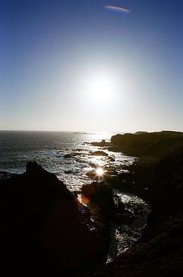 Photo of Melbourne Phillip Island: Penguins, Koalas and Kangaroos Day Tour from Melbourne Nobbies 4