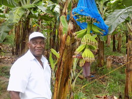 Sammy, the tour guide showed us a 600 acre banana plantation. He was a most engaging person full of interesting information! , Shawn B - April 2015
