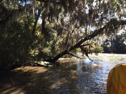 Cruising the Bayou is great fun, even more when the motor is revved up in the open water! , Michael H - December 2013