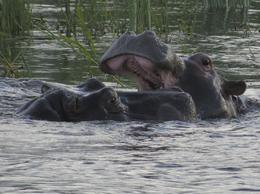 Photo of Cape Town Stellenbosch, Franschhoek and Paarl Valley Wine Day Trip Hippos on the Zambezi.
