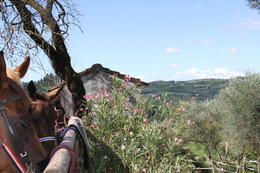 Photo of Florence Horse Riding in Chianti Day Trip from Florence At the barn