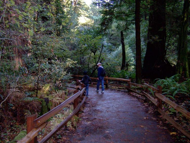 Muir Woods on the path - San Francisco