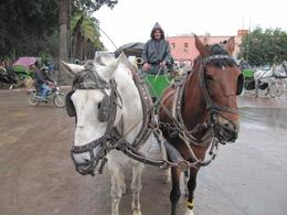 Photo of Marrakech Marrakech Discovery Tour Caleche