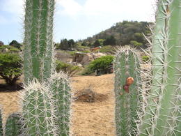 Photo of Aruba Island Tour of Aruba Cactus