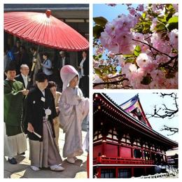 A perfect day in Tokyo: a traditional wedding, cherry blossoms and the temple., Asha & Brock - July 2013