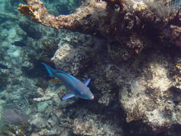 From the first snorkel site , Richard R - July 2014