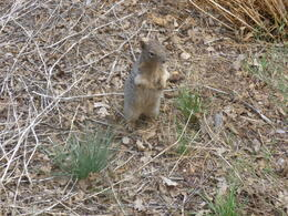 Photo of Las Vegas Deluxe Grand Canyon South Rim Airplane Tour Squirrel!