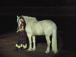 Photo of Orlando Arabian Nights Dinner Show Beautiful Horse