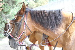 Our faithful companions were so gentle anyone could ride them! , Kathryn H - August 2011