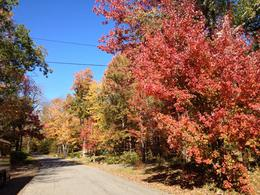 Photo of Boston Fall Foliage Sightseeing Tour from Boston Near Peterborough, New Hampshire (October 12, 2014