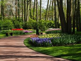 Photo of Amsterdam Keukenhof Gardens and Tulip Fields Tour from Amsterdam On the garden path