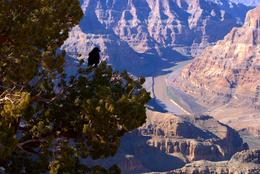 Photo of Las Vegas Grand Canyon West Rim Combo: Luxury SUV, Helicopter and Boat Grand Canyon