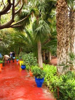 Walking through the Jardin Majorelle. - February 2010