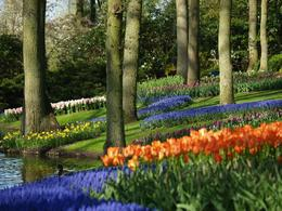 Photo de Amsterdam Amsterdam : visite des jardins de Keukenhof et des champs de tulipes On the edge of the pond