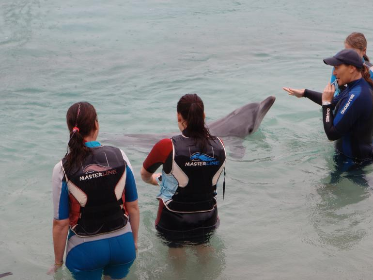 Swimming with the dolphins, Sea World - Brisbane