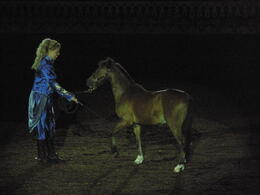Photo of Orlando Arabian Nights Dinner Show Baby Horse