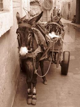 Donkeys in street - February 2010
